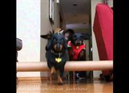 Bat-Dachshunds Foil the Burglar!