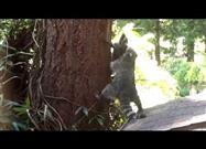 Mama Raccoon Teaching Kit How to Climb Trees
