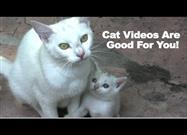Cat Video Therapy