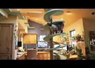 Homeowner Turns House Into Amazing Cat Playland