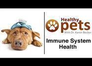 Mistakes That Compromise Your Pet's Immune System