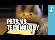 How Pets Handle Technology