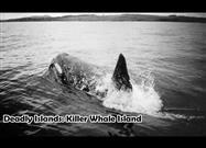 Killer Whale Island: Mystery of the Disappearing Elephant Seals