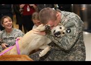 Dogs Welcome Soldiers Home Compilation