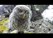 Adorable Baby Owls Find the Camera