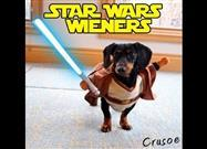 Dachshunds Play Star Wars Battles
