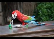 Entertaining Parrots Compilation