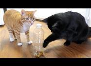 Clever Hacks Fur Cat Owners