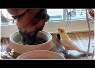 Cockatiel Whistles to Dog Having Lunch