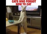 Cats Who Forgot How to Cat