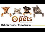 Why Your Pet's Allergies Are Getting Worse - and 7 Ways to Help Stop Them in Their Tracks