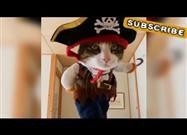 Pirate Cat on the Prowl