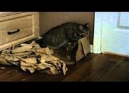 ¿Los Gatos Hacen Magia?