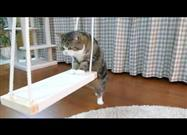 Maru Patiently Tackles the Swing