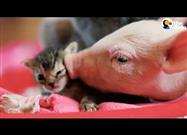 Rescue Pig and Kitten: Best Friends