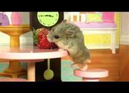 Hamster Estrenando Casa
