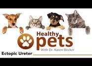 The Hidden Urinary Condition That Often Only Your Pet Knows About