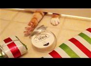 Foiled Again — Kitties Want to Help Wrap Gifts