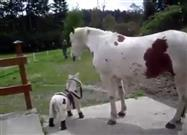 Mama Horse Consoled by Stuffed Pony