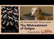 Between 50,000 and 100,000 of These Dogs Are Abandoned or Sacrificed Each Year as Breeders Chase the Elusive �Messiah� of Spanish Greyhounds