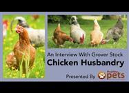 How to Raise Healthy, Happy and Long-Lived Backyard Chickens