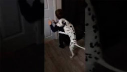 Dalmatian Has a Plan to Keep Kid at Home
