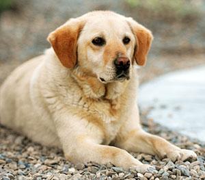 perro detecta cancer