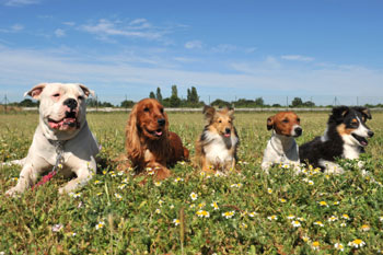 America's top dog breeds