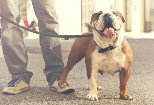 caminata de perros