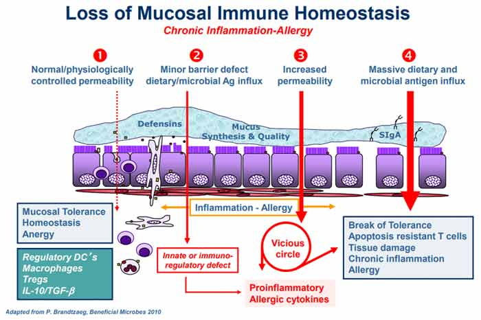 loss of mucosal immune homeostasis