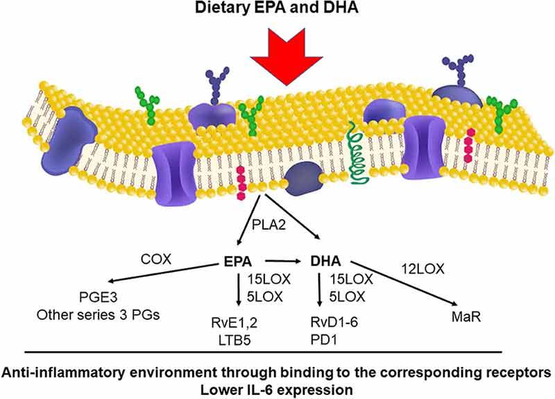 dietary EPA and DHA