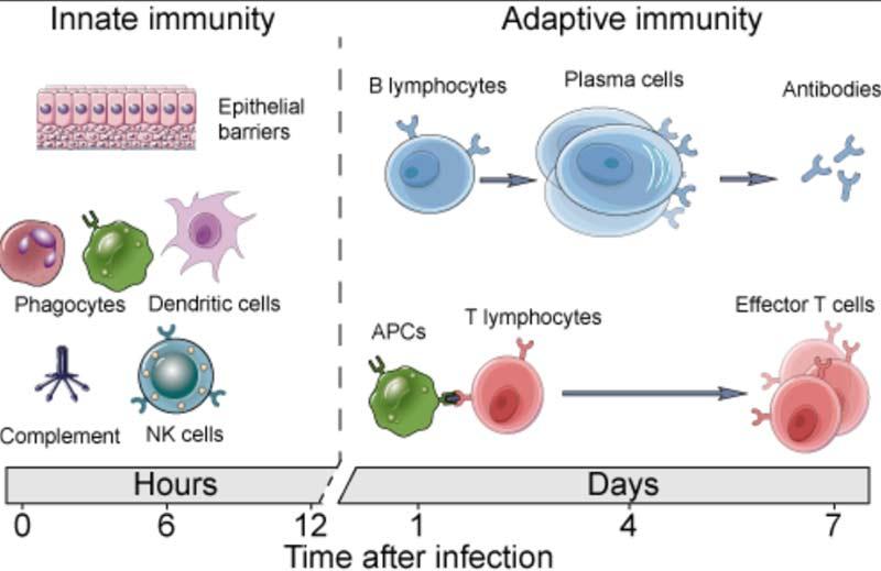 immunity graph