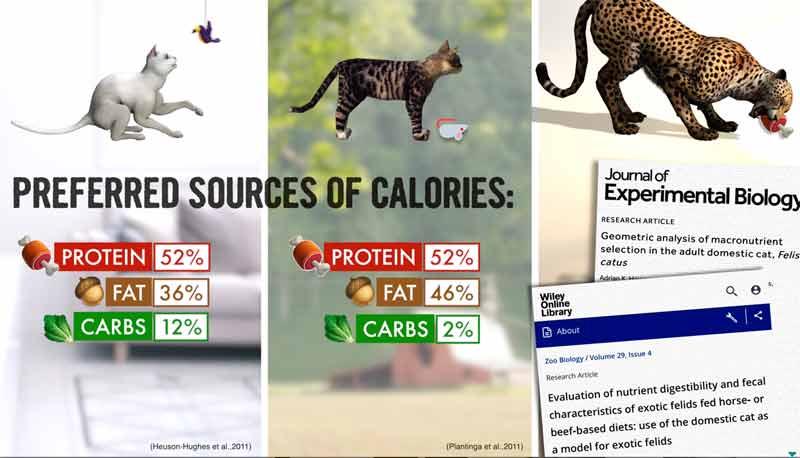 sources de calories préférées