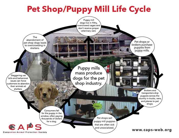 puppy mill life cycle