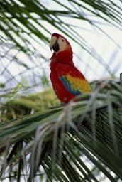 Rainforest Bird