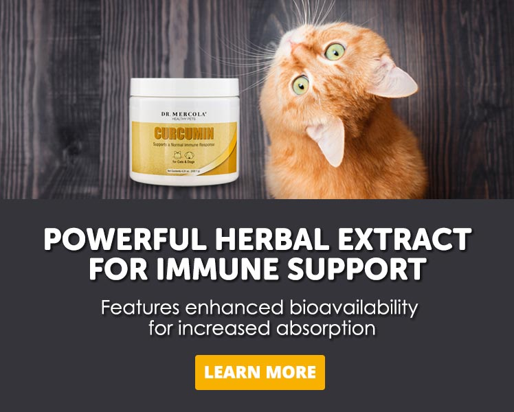 Curcumin for Pets Offer Mobile