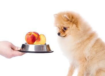 mascotas pueden comer duraznos