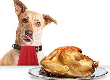 mascotas pueden comer pavo