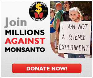 Money Bomb Monsanto