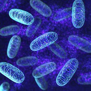 pqq-mitochondria