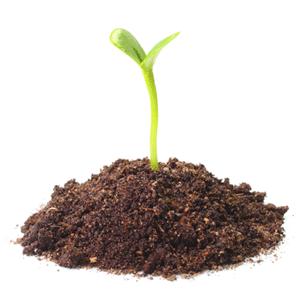 Biochar How To Improve Soil
