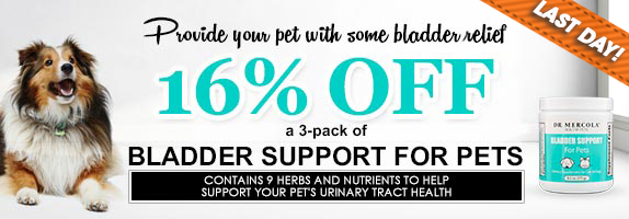 Bladder Support for Pets Special Offer