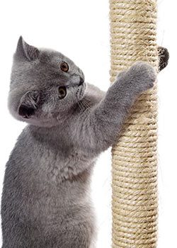 Scratching Posts
