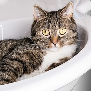Cats Bathing Rules