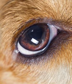 Pet's Eye Health Clues