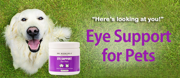 Eye Support for Pets Special Offer