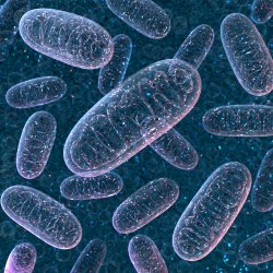Human Mitochondria