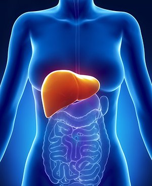 folic acid and liver