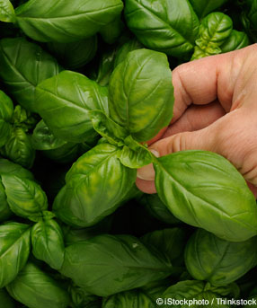 Basil Healthy Recipes