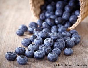 블루베리 영양분